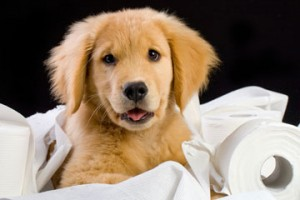 Carpet Cleaning Dog and Cat Pee Riverside CA